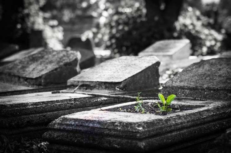 О жизни еврейского местечка до и во время погромов
