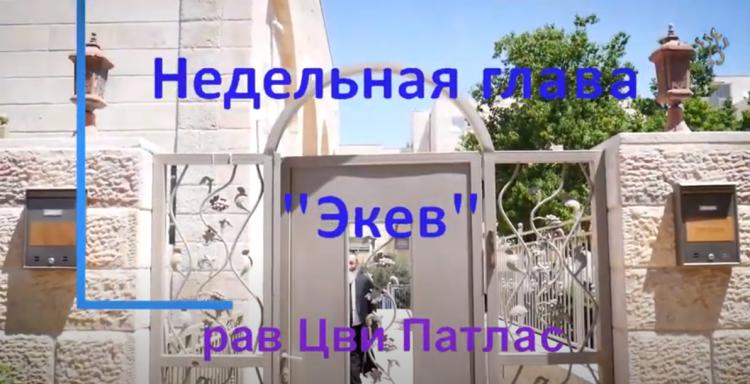 Рав Цви Патлас в комментарии к недельной главе Торы Экев